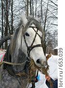 Купить «Белая лошадь», фото № 653039, снято 23 октября 2018 г. (c) ElenArt / Фотобанк Лори