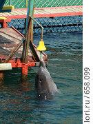 Дельфин. Стоковое фото, фотограф Дмитрий С. / Фотобанк Лори