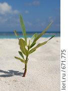 Росток на пляже. Стоковое фото, фотограф Вячеслав Москалев / Фотобанк Лори