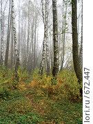 Купить «Березовая роща осенью», фото № 672447, снято 24 октября 2008 г. (c) Андрей Рыбачук / Фотобанк Лори