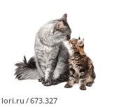Купить «Кошка с котенком», фото № 673327, снято 26 января 2009 г. (c) Бутинова Елена / Фотобанк Лори