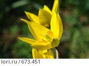 Цветок. Стоковое фото, фотограф Никита Савин / Фотобанк Лори