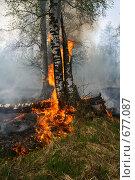 Купить «Лесной пожар. Горящая берёза», фото № 677087, снято 1 мая 2008 г. (c) Анна Андреева / Фотобанк Лори