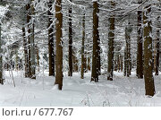 Купить «Зимний лес», фото № 677767, снято 17 января 2009 г. (c) Юрий Брыкайло / Фотобанк Лори