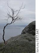 Дерево. Стоковое фото, фотограф Tuuli Hakulinen / Фотобанк Лори