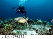Купить «Подводный фотограф в погоне за черепахой», фото № 678815, снято 19 марта 2008 г. (c) Татьяна Белова / Фотобанк Лори