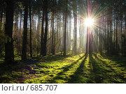 Купить «Рассвет Беловежская пуща», фото № 685707, снято 12 сентября 2007 г. (c) Артур Якуцевич / Фотобанк Лори
