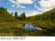Купить «Лес. Горный Алтай», фото № 686927, снято 21 июля 2008 г. (c) Селигеев Андрей Иванович / Фотобанк Лори