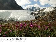 Купить «Ледник Маашей. Горный Алтай», фото № 686943, снято 23 июля 2008 г. (c) Селигеев Андрей Иванович / Фотобанк Лори