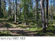 Лесной пейзаж. Стоковое фото, фотограф Levin Alexandr / Фотобанк Лори