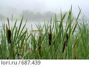 Купить «Камыши на озере», фото № 687439, снято 20 июля 2008 г. (c) Андрей Рыбачук / Фотобанк Лори