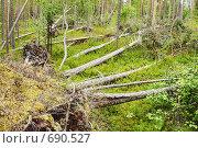 Купить «Бурелом в лесу. Последствия смерча», фото № 690527, снято 23 января 2019 г. (c) Вадим Кондратенков / Фотобанк Лори