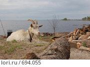 Коза. Стоковое фото, фотограф семен плужник / Фотобанк Лори