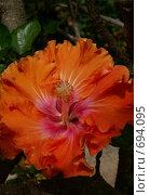 Купить «Тропический цветок», эксклюзивное фото № 694095, снято 7 августа 2007 г. (c) Михаил Карташов / Фотобанк Лори