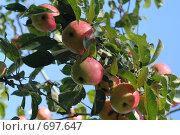 Купить «Осенние, полосатые!», фото № 697647, снято 13 октября 2007 г. (c) Наталья Цветкова / Фотобанк Лори