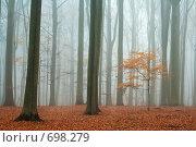Купить «Туман в осеннем лесу», фото № 698279, снято 30 ноября 2006 г. (c) Михаил Лавренов / Фотобанк Лори