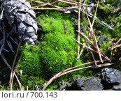 Природный натюрморт: шишка сосны, хвоя, мох. Стоковое фото, фотограф Антон Серохвостов / Фотобанк Лори