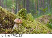 Купить «Белый гриб во мху на фоне леса», фото № 702231, снято 2 августа 2008 г. (c) FotograFF / Фотобанк Лори