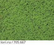 Купить «Ряска», эксклюзивное фото № 705667, снято 6 августа 2007 г. (c) Михаил Карташов / Фотобанк Лори