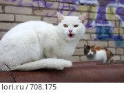 Купить «Белая кошка с желтыми глазами», эксклюзивное фото № 708175, снято 16 февраля 2009 г. (c) Яна Королёва / Фотобанк Лори