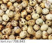 Купить «Яйцо перепелиное», фото № 708843, снято 22 января 2009 г. (c) Дмитрий Натарин / Фотобанк Лори
