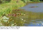 Купить «Монастырское озеро на горе Бештау. Заросли лотоса», фото № 711727, снято 4 июля 2008 г. (c) Александр Тараканов / Фотобанк Лори