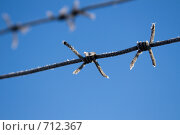 Купить «Мороз и солнце. Колючая проволока.», фото № 712367, снято 19 февраля 2009 г. (c) Виктор Куплевацкий / Фотобанк Лори