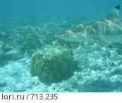 Купить «Подводный мир Мальдивы рифовая акула», фото № 713235, снято 7 сентября 2008 г. (c) Сергей Учаев / Фотобанк Лори