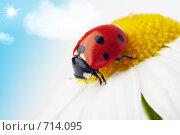 Купить «Божья коровка на цветке», фото № 714095, снято 9 июля 2007 г. (c) Анатолий Типляшин / Фотобанк Лори