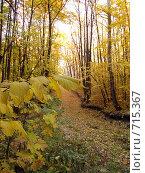 Осенний лес. Стоковое фото, фотограф Голов Евгений Эдуардович / Фотобанк Лори