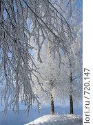 Купить «Снежные узоры», фото № 720147, снято 9 марта 2008 г. (c) Юрков Виктор Петрович / Фотобанк Лори