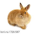 Купить «Кролик», фото № 720587, снято 20 февраля 2009 г. (c) Ольга Киселева / Фотобанк Лори