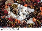 Купить «Морские ракушки», фото № 721951, снято 22 февраля 2009 г. (c) Криволап Ольга / Фотобанк Лори