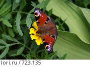 Красивая бабочка. Стоковое фото, фотограф Дмитрий Жеглов / Фотобанк Лори