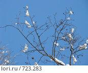 Ветка на фоне неба. Стоковое фото, фотограф Юлия Анатольевна / Фотобанк Лори