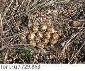 Купить «Гнездо куропатки», фото № 729863, снято 11 июня 2008 г. (c) Афанасьев Юрий / Фотобанк Лори