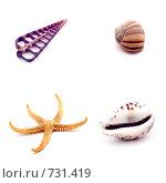 Купить «Группа раковин морских животных», фото № 731419, снято 19 августа 2018 г. (c) Юрий Винокуров / Фотобанк Лори