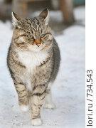 Котенок. Стоковое фото, фотограф Лут Ольга / Фотобанк Лори