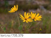 Купить «Оранжевые цветы», фото № 735379, снято 3 сентября 2006 г. (c) Argument / Фотобанк Лори