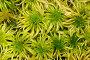 Зеленый мох, фото № 735475, снято 5 октября 2006 г. (c) Argument / Фотобанк Лори