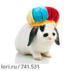 Купить «Праздничный кролик в цветастом берете», фото № 741531, снято 18 июня 2019 г. (c) Александр Fanfo / Фотобанк Лори