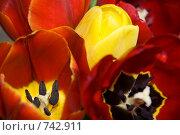 Открытка - тюльпаны, фон. Стоковое фото, фотограф Владимир / Фотобанк Лори
