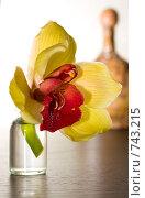 Купить «Орхидея на столе», фото № 743215, снято 10 марта 2009 г. (c) Алексей Байдин / Фотобанк Лори