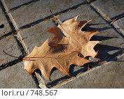 Купить «Осенние Ноты: Любовь», фото № 748567, снято 29 октября 2008 г. (c) Иван Авдеев / Фотобанк Лори