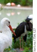 Купить «Аист в зоопарке», фото № 754127, снято 2 июля 2008 г. (c) Юрий Брыкайло / Фотобанк Лори