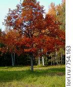Красное дерево (2008 год). Редакционное фото, фотограф Турищева Оксана / Фотобанк Лори