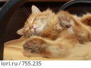 Спящий рыжий кот. Стоковое фото, фотограф Igor Lijashkov / Фотобанк Лори