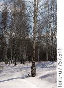 Купить «Зимний пейзаж», фото № 757511, снято 14 марта 2009 г. (c) Юрий Бельмесов / Фотобанк Лори