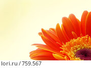 Солнышко. Стоковое фото, фотограф Наталья Щербань / Фотобанк Лори