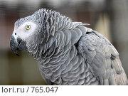 Купить «Жако. Говорящий попугай», эксклюзивное фото № 765047, снято 19 марта 2009 г. (c) Яна Королёва / Фотобанк Лори